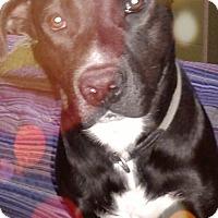 Adopt A Pet :: Joe - Albuquerque, NM