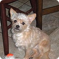 Adopt A Pet :: Olaf - Brunswick, ME