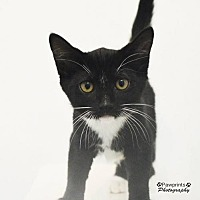 Adopt A Pet :: Steven - Balto, MD