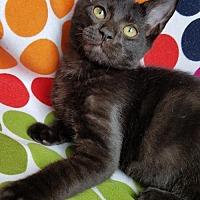 Adopt A Pet :: Kellogg - Hornell, NY
