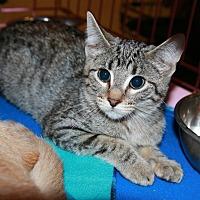 Adopt A Pet :: Lil - Rochester, MN