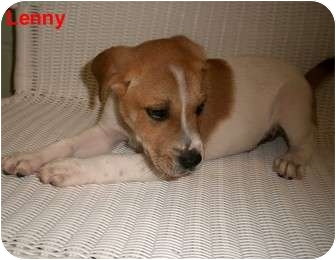Hound (Unknown Type) Mix Puppy for adoption in Slidell, Louisiana - Lenny