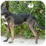 Photo 4 - Dutch Shepherd Mix Dog for adoption in Los Angeles, California - Gitana von Kern