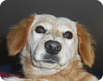Dachshund Mix Dog for adoption in Murphysboro, Illinois - Abby