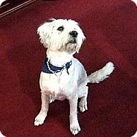 Adopt A Pet :: Blue - Destrehan, LA