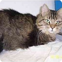 Adopt A Pet :: Lady - Quincy, MA