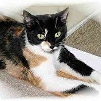 Adopt A Pet :: Patches II - Montgomery, IL