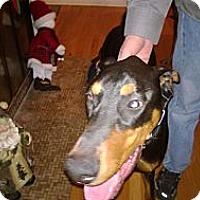 Adopt A Pet :: Zeus - Allegan, MI