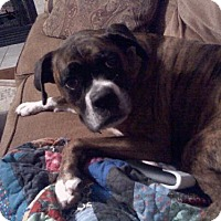 Adopt A Pet :: Isa (courtesy listing) - Brentwood, TN