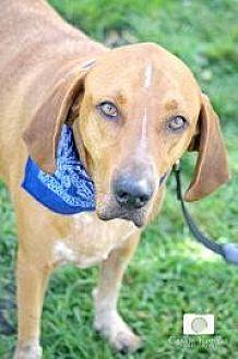 Labrador Retriever Mix Dog for adoption in Loxahatchee, Florida - Fred