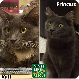 Domestic Mediumhair Cat for adoption in Oakville, Ontario - Katt & Princess