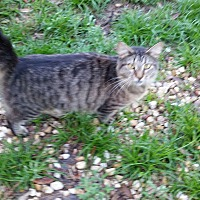 Adopt A Pet :: Arrow - Bronson, FL