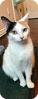 Calico Cat for adoption in ROSENBERG, Texas - Miranda