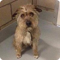 Adopt A Pet :: Marvin - Manhattan, KS