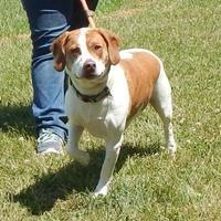 Adopt A Pet :: Cronus - Clearfield, PA