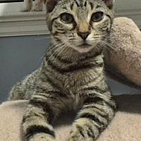 Adopt A Pet :: Sara - Madison, NJ