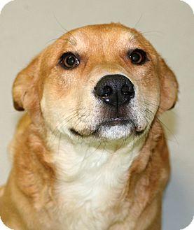 Shepherd (Unknown Type)/Terrier (Unknown Type, Medium) Mix Dog for adoption in Muskegon, Michigan - Paxton