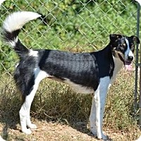 Adopt A Pet :: Cherri - New Boston, NH