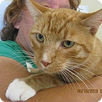 Adopt A Pet :: Simson - West Dundee, IL