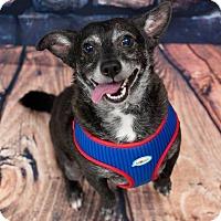 Adopt A Pet :: Sammy - Oakley, CA
