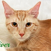 Adopt A Pet :: Oliver  Male - Knoxville, TN