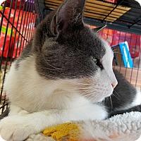 Adopt A Pet :: Eddie - Queens, NY