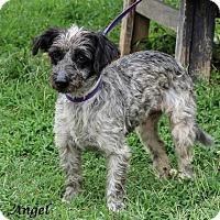Adopt A Pet :: ANGEL in Rhode Island - West Warwick, RI