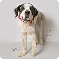 Adopt A Pet :: Jenny - Riverside, CA