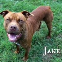 Adopt A Pet :: Jake - Melbourne, KY