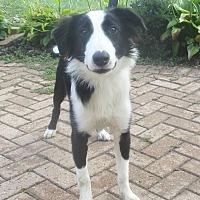 Adopt A Pet :: Bandito - West Chicago, IL