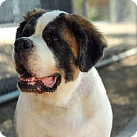 Adopt A Pet :: SAMANTHA - Glendale, AZ