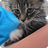 Adopt A Pet :: Mila - Riverhead, NY