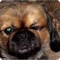 Adopt A Pet :: Boo Boo Bear-NY - Edmeston, NY