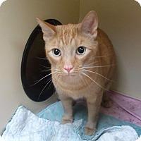 Adopt A Pet :: Nitro - Pittstown, NJ