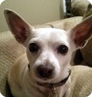 Chihuahua Mix Dog for adoption in Las Vegas, Nevada - Blanca