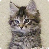 Adopt A Pet :: Montara - North Highlands, CA