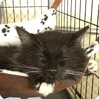 Adopt A Pet :: Force - Byron Center, MI