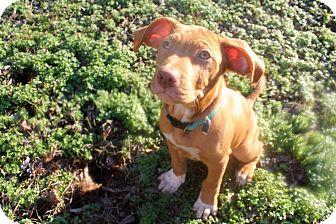 Mixed Breed (Medium) Mix Puppy for adoption in FOSTER, Rhode Island - Walt