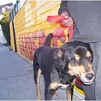 Adopt A Pet :: PACO - Malibu, CA