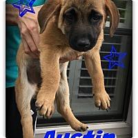 Adopt A Pet :: Austin - West Hartford, CT