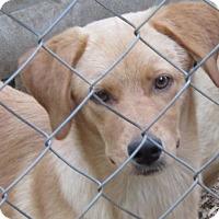 Adopt A Pet :: Chloe - Harrisonburg, VA