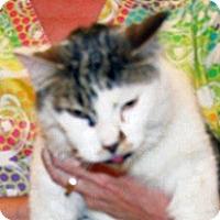 Adopt A Pet :: 351929 - Wildomar, CA