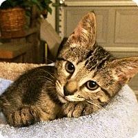 Adopt A Pet :: Crumb - Orange, CA
