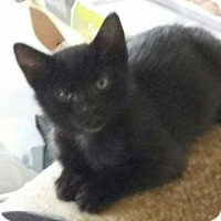Adopt A Pet :: Thunder - Baltimore, MD