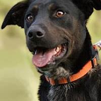 Adopt A Pet :: Durango - Wichita Falls, TX