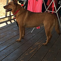 Adopt A Pet :: Noni **Read full Description** - Spokane, WA