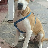 Adopt A Pet :: Mocha - San Ysidro, CA