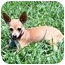 Photo 4 - Chihuahua Mix Puppy for adoption in AUSTIN, Texas - VALENTINA