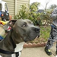 Adopt A Pet :: Trey - South Jersey, NJ