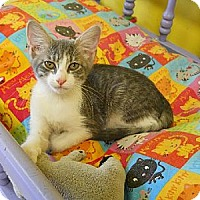 Adopt A Pet :: Miranda - Mobile, AL